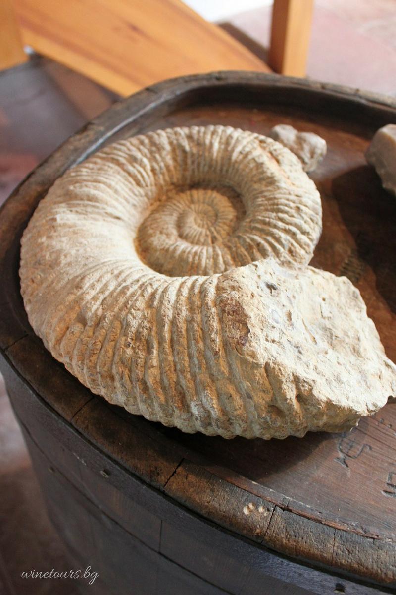 agape alsace fossil