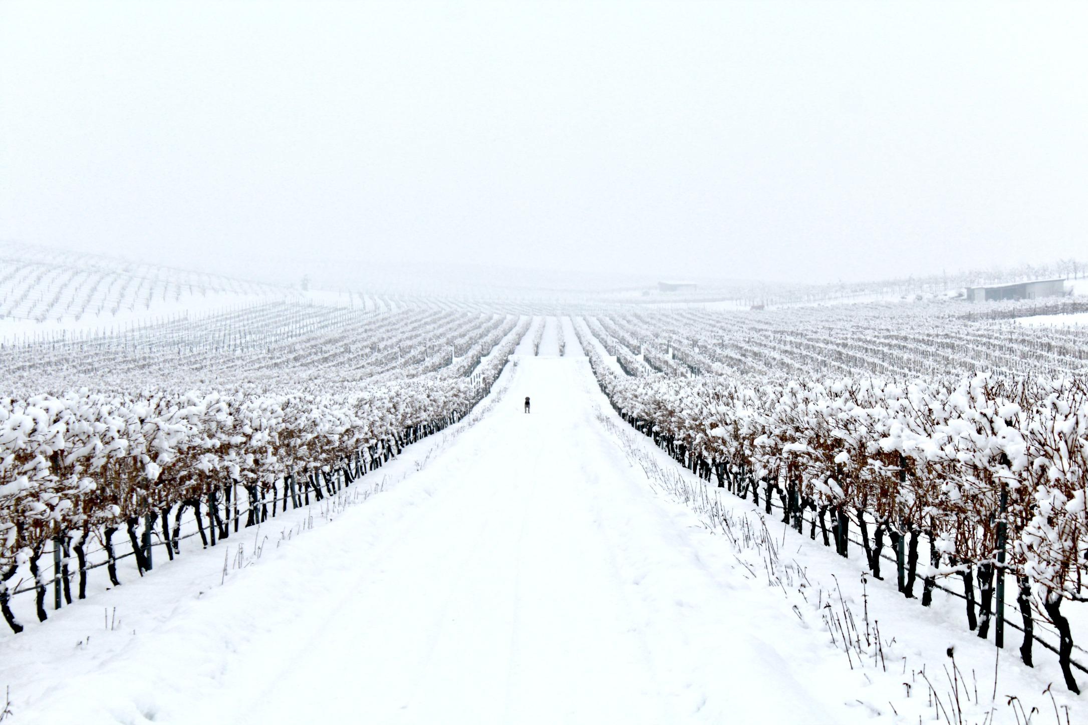 Yustina-winter-0