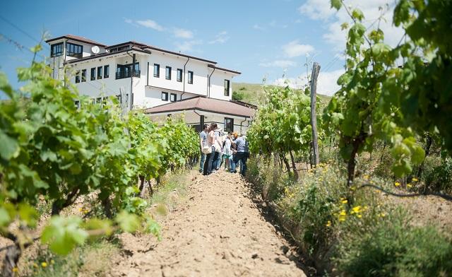 villa-melnik-harvest-1