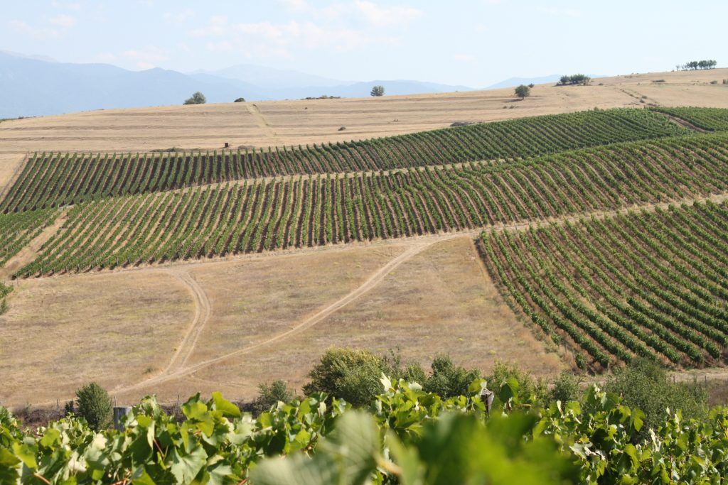 Levunovo vineyards
