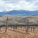 Два дни в Мелнишко по пътя на виното