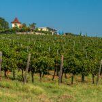 Пролетно-лятна винена отбивка до винарска изба Рупел